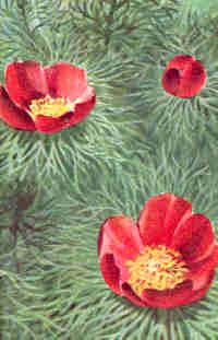 Flora of Ukrainian Steppe - (C) 1998-2014 Viktor Prysyazhnyuk ...